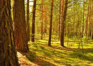 pefc madera sostenible reforestacion